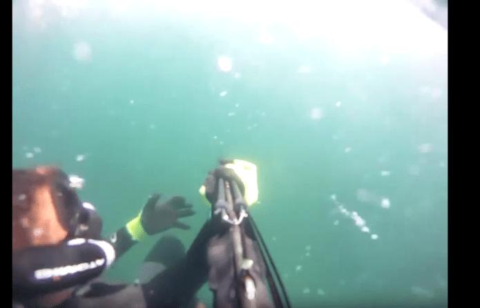 ataque-tiburon-blanco-pescador