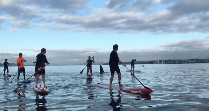 Palistas-orcas