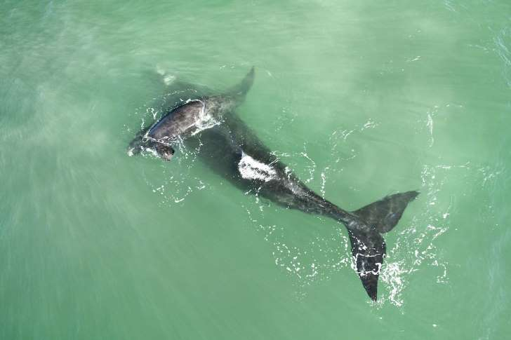 ballena-tiburon