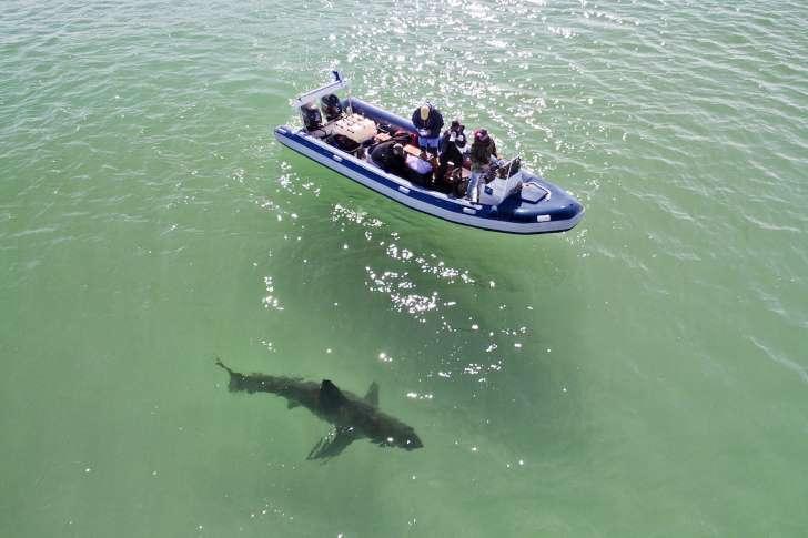 barco-tiburon
