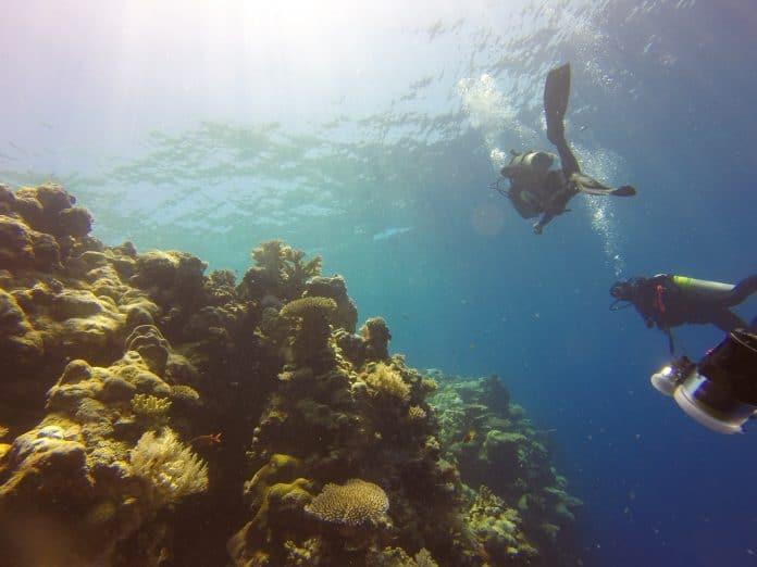 blue-corner-reef-696x522