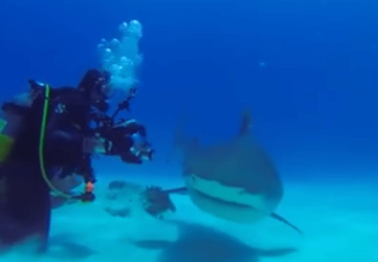 tiburones-maquinas-de-matar
