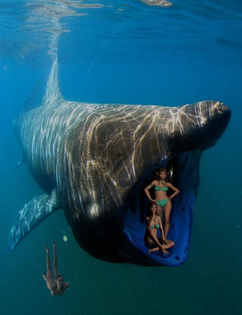 ballena y buceo